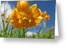 Tiger Lily  Greeting Card by Dan A  Barker