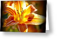 Tiger Lily Flower Greeting Card