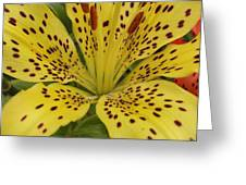 Tiger Lily Greeting Card by Gregory Young