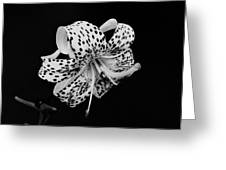 Tiger Lily In Black And White Greeting Card