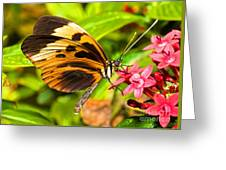 Tiger Mimic Butterfly Greeting Card
