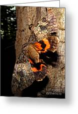 Tiger Moth Flight Greeting Card