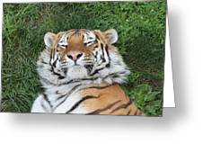 Tiger Nap Time Greeting Card
