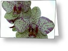 Tiger Orchid Greeting Card