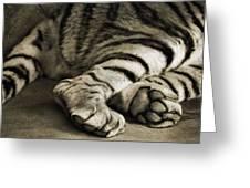 Tiger Paws Greeting Card