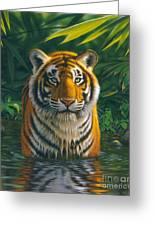 Tiger Pool Greeting Card