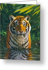 Tiger Pool Greeting Card