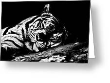 Tiger R And R Black And White Greeting Card