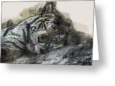 Tiger R And R Greeting Card