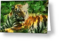 Tiger Resting Photo Art 03 Greeting Card