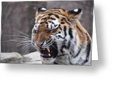 Tiger Smile Greeting Card