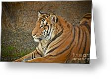 Tiger Stair Greeting Card