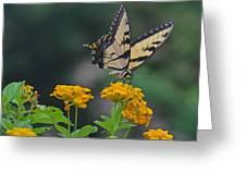 Tiger Swallowtail And Lantana Greeting Card