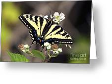 Tiger Swallowtail Butterfly 2a Greeting Card