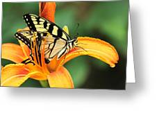 Tiger Swallowtail Butterfly On Daylily Greeting Card