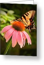 Tiger Swallowtail Feeding Greeting Card