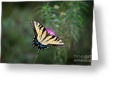 Tiger Swallowtail I Believe Greeting Card
