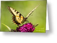 Tiger Swallowtail Greeting Card