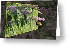 Tiger Swallowtail Oob-featured In Beautycaptured-oof-harmony And Happiness Greeting Card