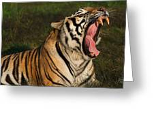 Tiger Teeth Greeting Card