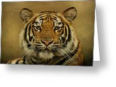 Tiger Tiger Greeting Card