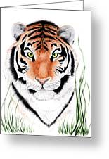 Tiger Tiger Where Greeting Card