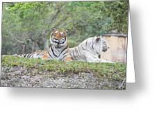 Tiger Time Greeting Card