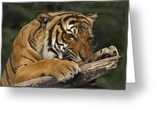 Tiger3 Greeting Card