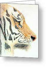 Tiger's Head Greeting Card