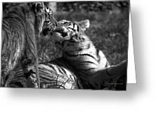 Tigers Kissing Greeting Card