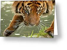 Tiger's Stealth Greeting Card