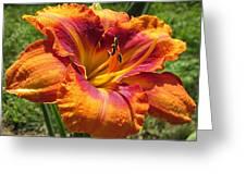 Tigger Daylily Greeting Card