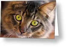 Tigger's Stare Greeting Card