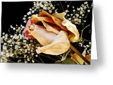 Tightly Wrapped Petals Greeting Card by Tanya Jacobson-Smith