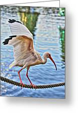 Tightrope Walking Ibis Greeting Card