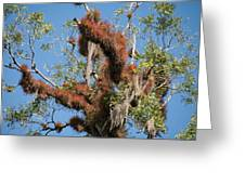 Tikal Furry Tree Closeup Greeting Card