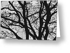 Tilia Night Silhouette Greeting Card
