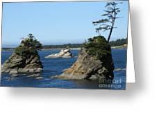 Tillamook Tree Horizontal Greeting Card