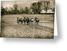 Tilling The Fields Greeting Card by Tom Mc Nemar