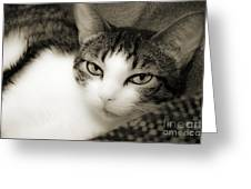 Tilly Little Miss Attitude Greeting Card