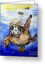 Tillyturtle Greeting Card