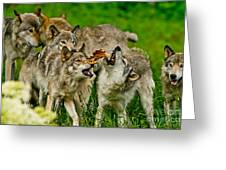 Timber Wolf Pictures 1593 Greeting Card