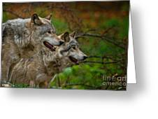 Timber Wolf Pictures 1710 Greeting Card
