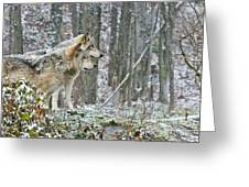 Timber Wolf Pictures 184 Greeting Card