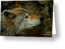 Timber Wolf Pictures 268 Greeting Card