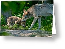 Timber Wolf Pictures 332 Greeting Card