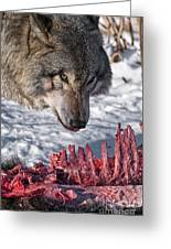 Timber Wolf Pictures 552 Greeting Card