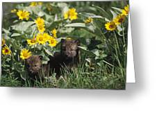 Timber Wolf Pups And Flowers North Greeting Card