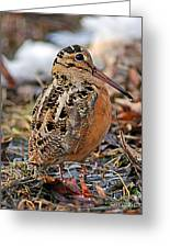Timberdoodle The American Woodcock Greeting Card