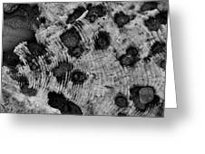 Time Holes - Square - Bw - Wonderwood Collection - Olympic Peninsula Wa Greeting Card